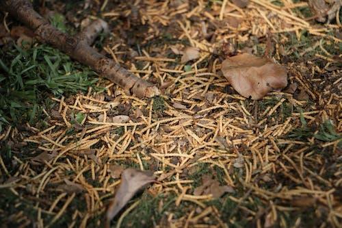 Безкоштовне стокове фото на тему «відділення, опале листя»