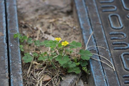 Безкоштовне стокове фото на тему «бруд, квітка»