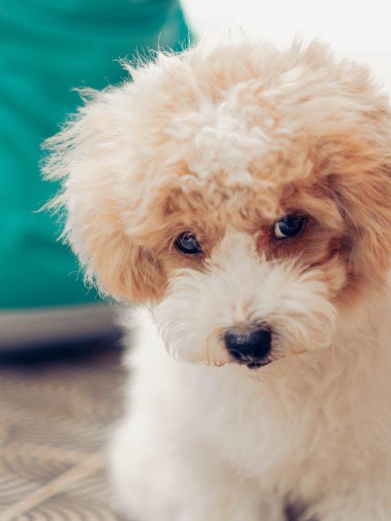 犬, 赤ちゃんの犬
