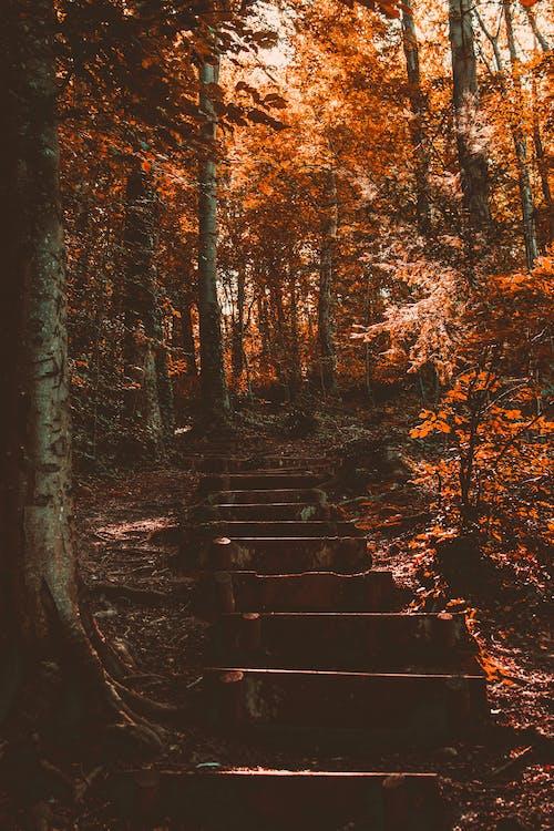下落, 平靜, 戶外, 森林 的 免费素材照片