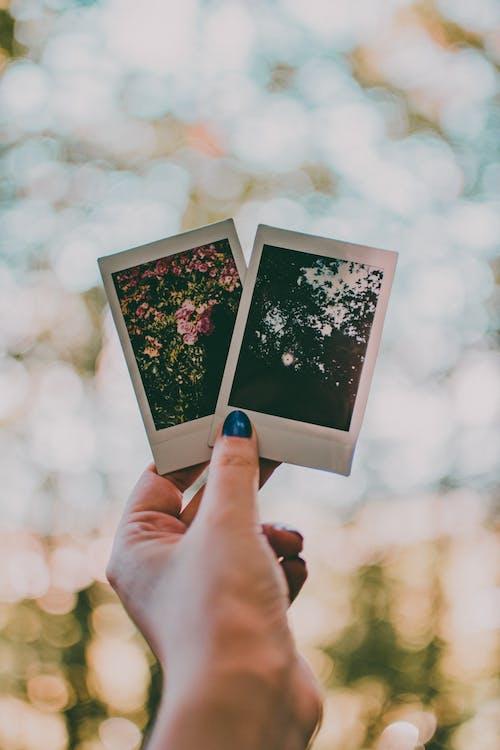 fotografies, fotos, imatges