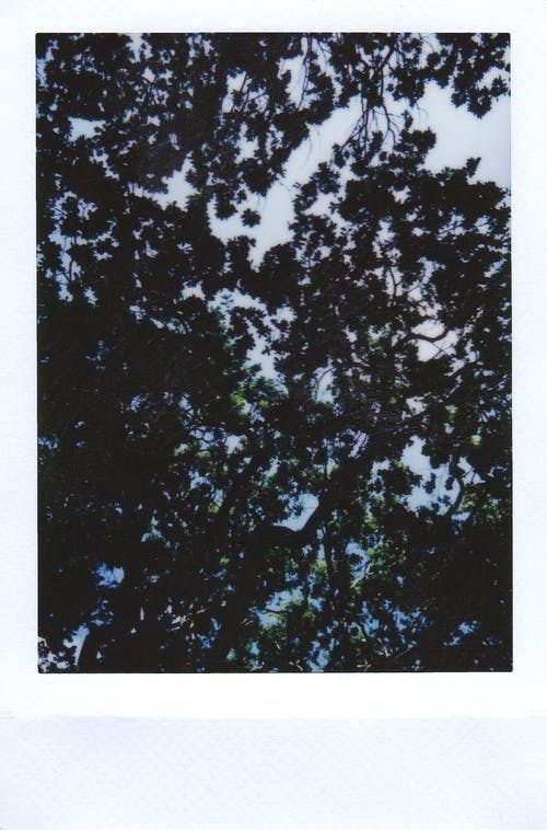 Polaroid Photo Of Branches