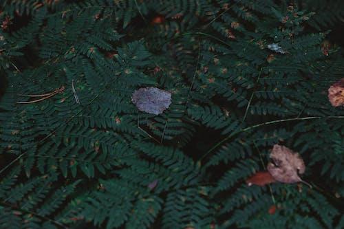 天性, 森林, 葉子 的 免費圖庫相片
