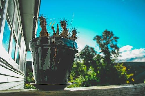 Imagine de stoc gratuită din arbore, cactus, cămin, ceaun
