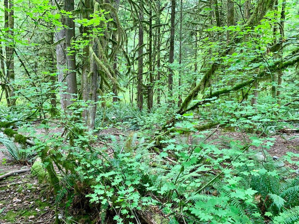 canada, fern, hiking