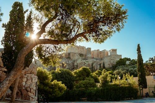 Fotos de stock gratuitas de acrópolis, arboles, árboles verdes, Atenas