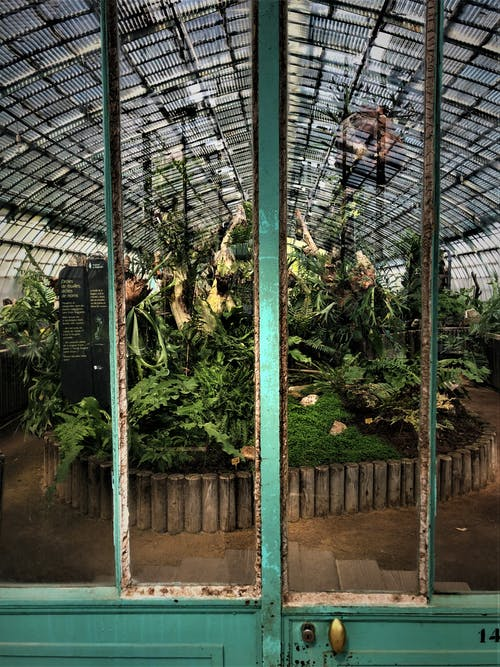 Green-leafed Plants Inside Green House