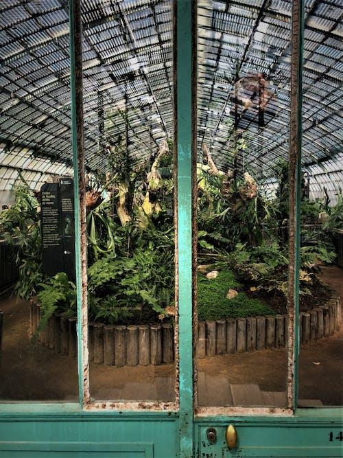 Kostnadsfri bild av anläggning, arkitektur, botanisk, dagsljus
