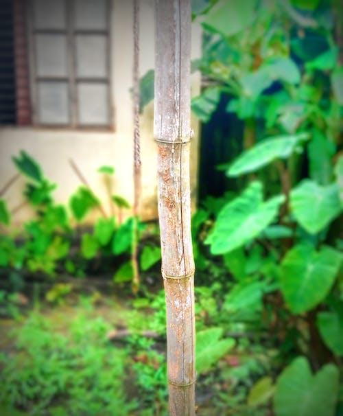 Foto d'estoc gratuïta de bambú