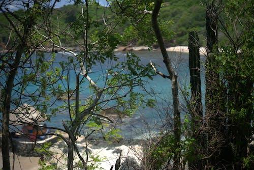 Immagine gratuita di alberi, cactus, impianti, sabbia
