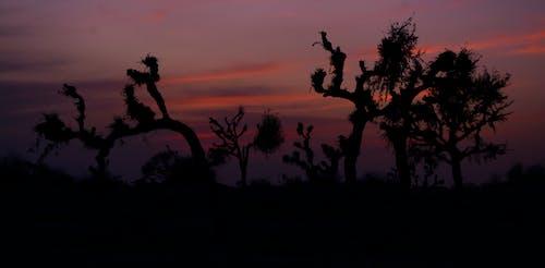 Immagine gratuita di albero, colori, colori autunnali, colori d'autunno