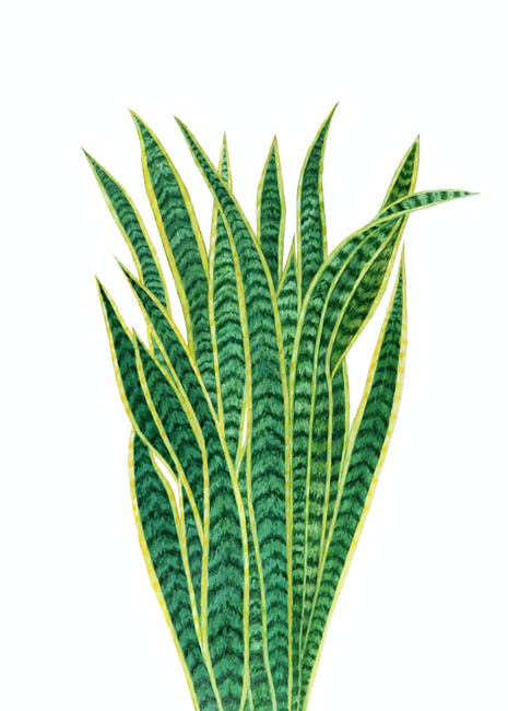 Green snake plant illustration