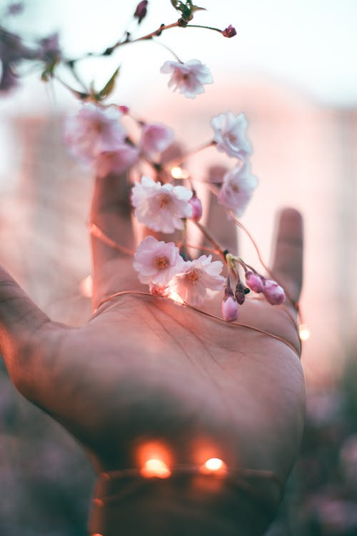 mississauga, 꼬마 전구, 꽃, 꽃이 피는의 무료 스톡 사진