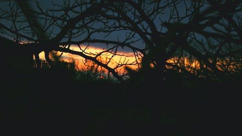 Foto d'estoc gratuïta de a l'aire lliure, alba, arbres, branca