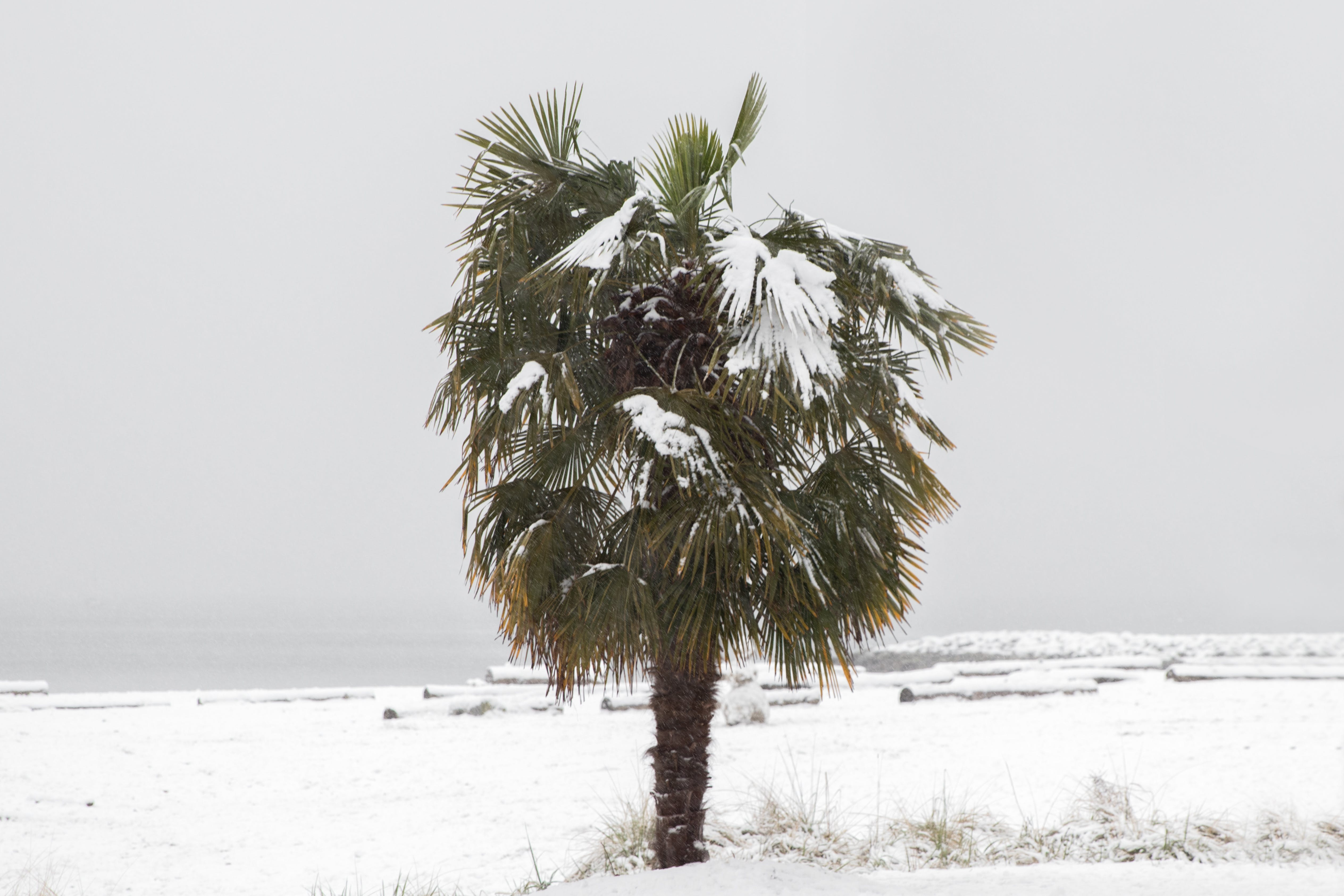 Free stock photo of ocean, palm tree, winter