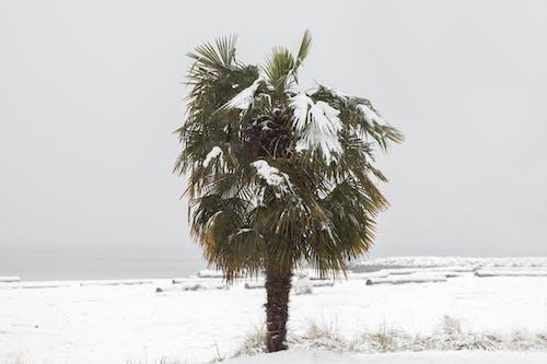 คลังภาพถ่ายฟรี ของ ต้นปาล์ม, มหาสมุทร, ฤดูหนาว