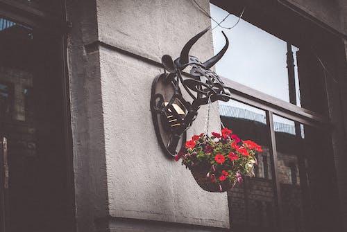 Kostnadsfri bild av 4k tapeter, bakgrund, bar, blommor