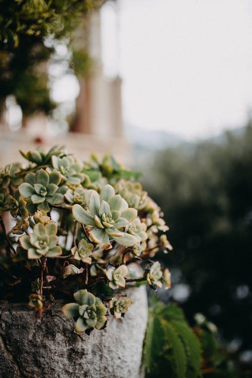 녹색의 무료 스톡 사진