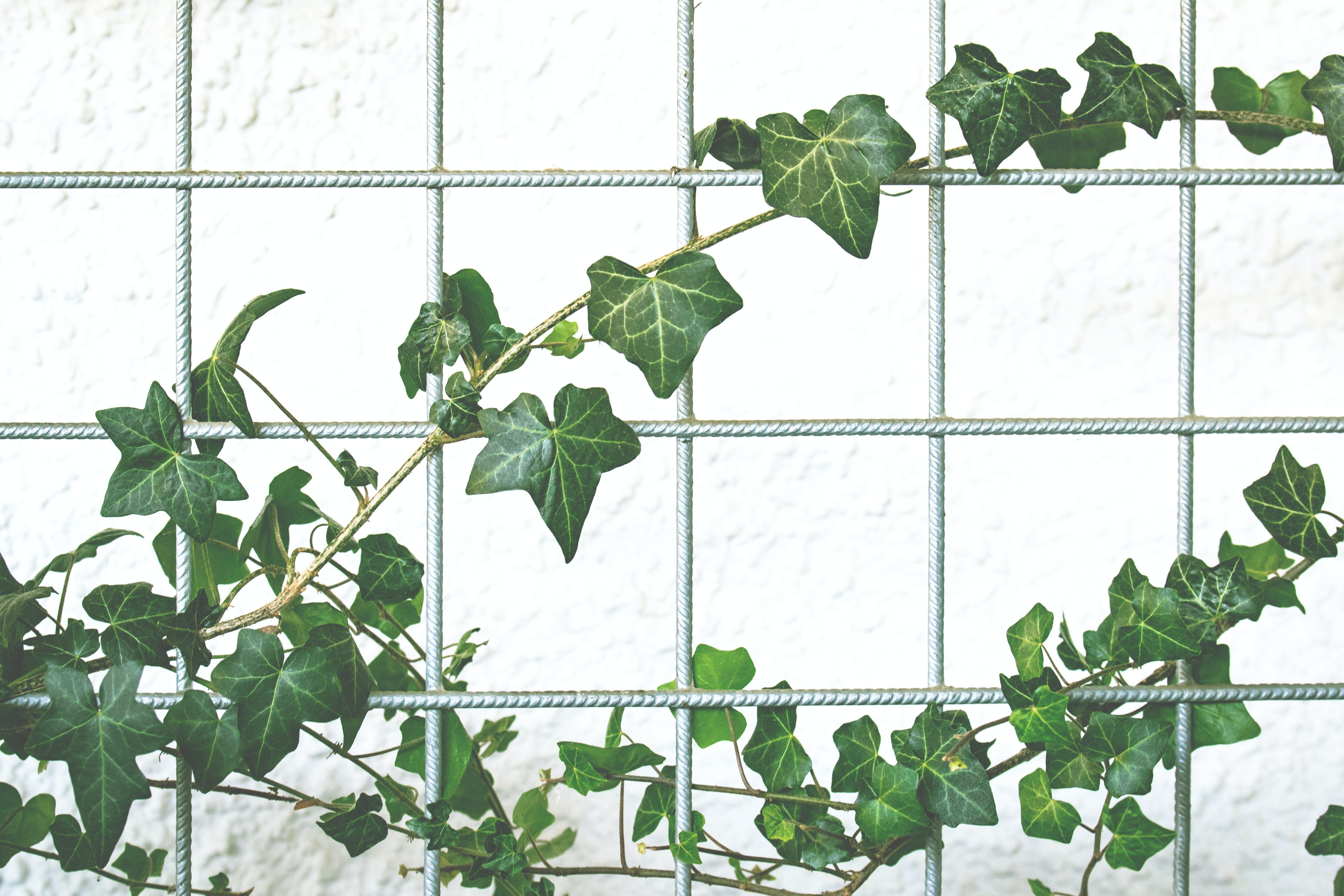 Kostenloses Stock Foto zu ast, blatt, dekoration, draußen
