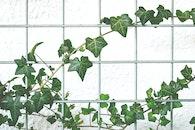 summer, wall, garden