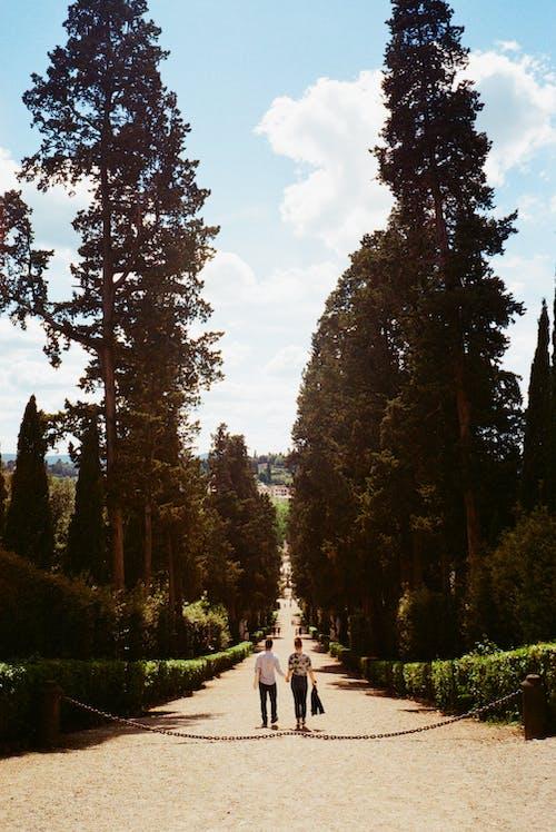 Gratis arkivbilde med gå, holde hender, par, romantisk
