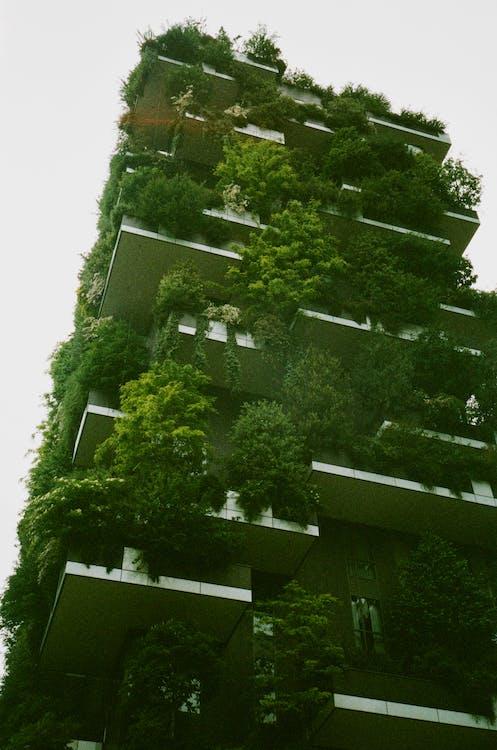 alberi, ambiente, architettura