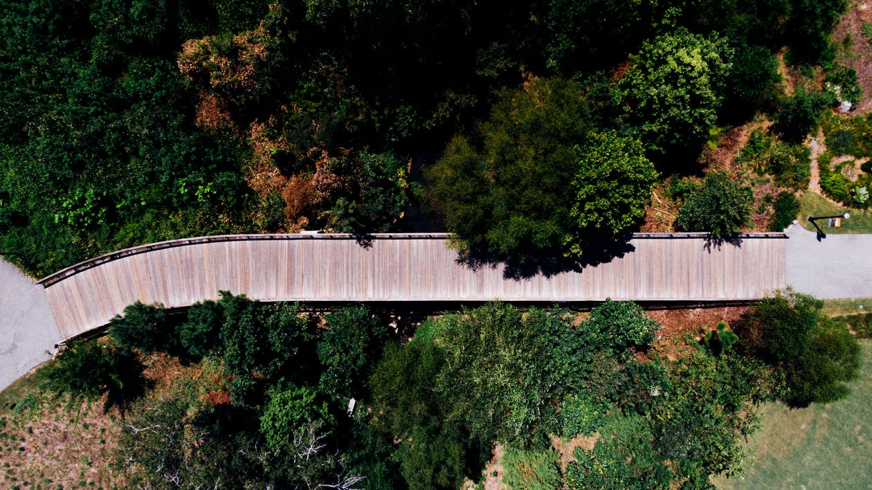 Aerial Photography Of Path In Between Trees