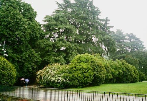 Gratis lagerfoto af efter regn, filmfotografering, italien, Milano