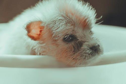 Immagine gratuita di amante degli animali, animale, biancaneve, bianco