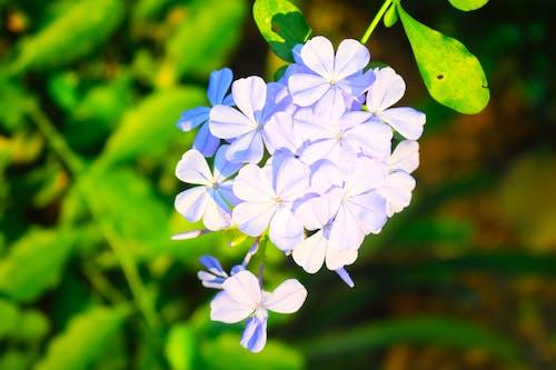 Ilmainen kuvapankkikuva tunnisteilla kasvikunta, Kauneus, kauneus luonnossa, kaunis kukka