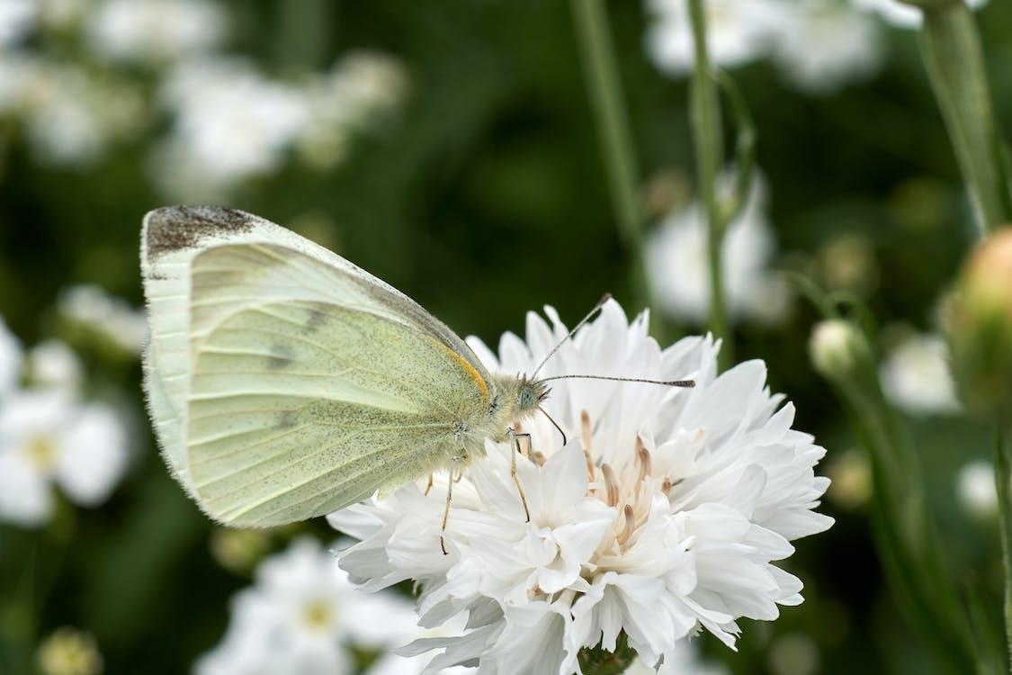 fluture, fluture pe o floare, frumusețe în natură