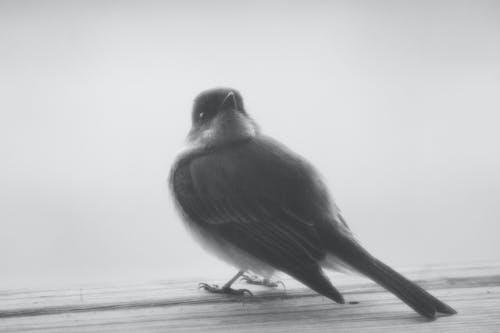Imagine de stoc gratuită din pasăre