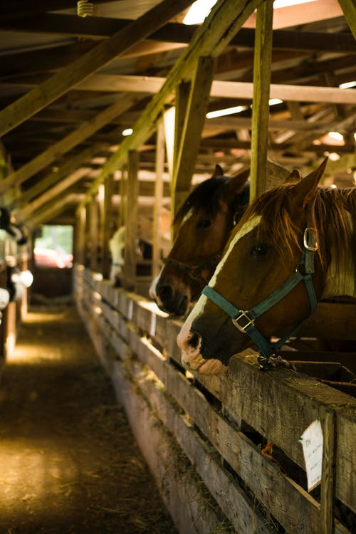 Free stock photo of barn, hay, horse, stable