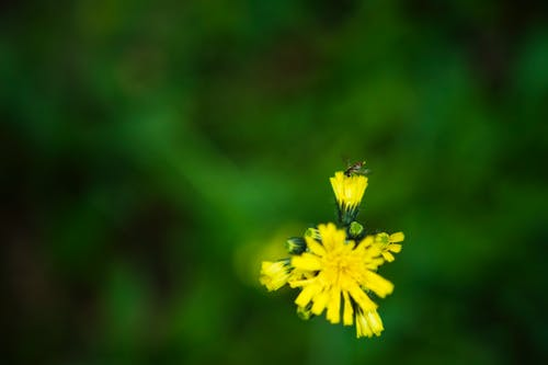 Free stock photo of bug, insect, nature, yellow flower