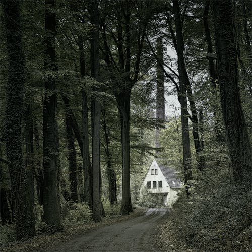 Photo of a House Surrounded by Tall Trees