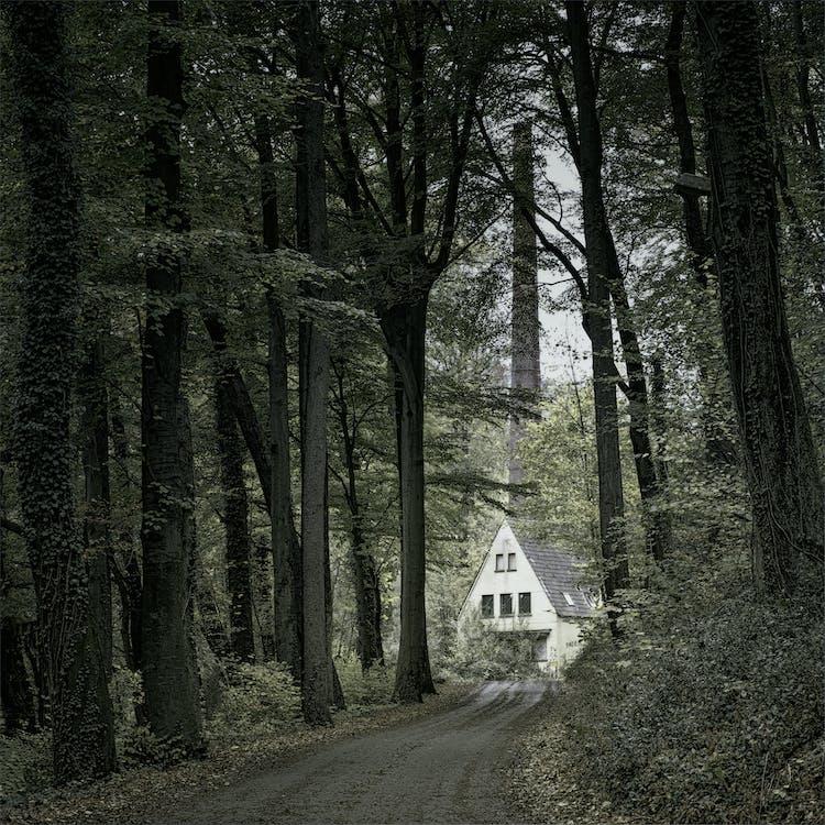 căn nhà, cây cao, gỗ