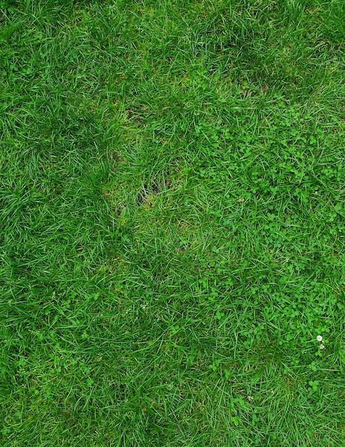 Free stock photo of garden, grass, green