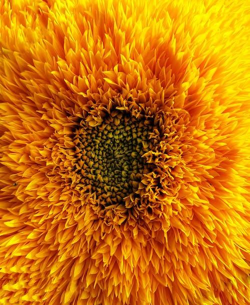 Free stock photo of flower, macro, nature