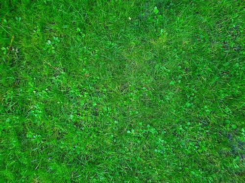 Free stock photo of field, garden, grass