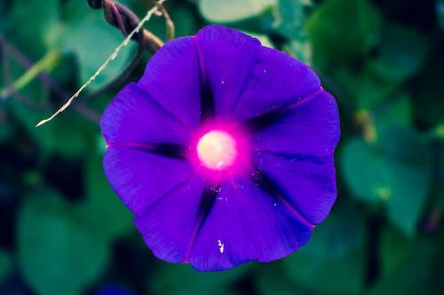 Foto d'estoc gratuïta de colors brillants, flor bonica, morat, verd