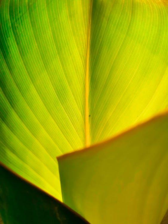 зелений, лист, Природа