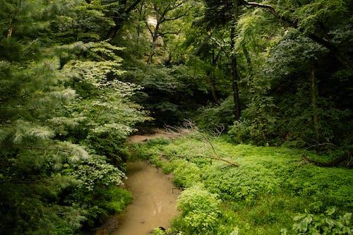 Fotobanka sbezplatnými fotkami na tému rieka, stromy, voda
