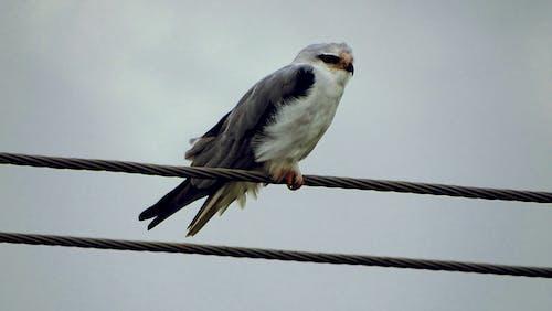一只鸟, 動物, 户外摄影, 没有人 的 免费素材照片