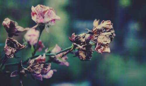 Photos gratuites de automne, centrales, couleurs automnales, fleurs