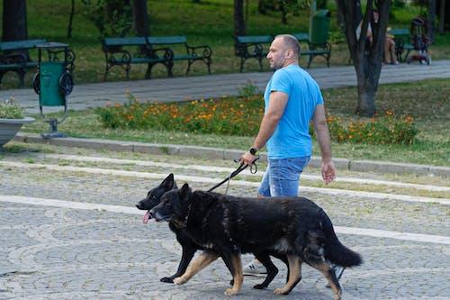 Darmowe zdjęcie z galerii z bruk, chodnik, chodzenie, czarne futro