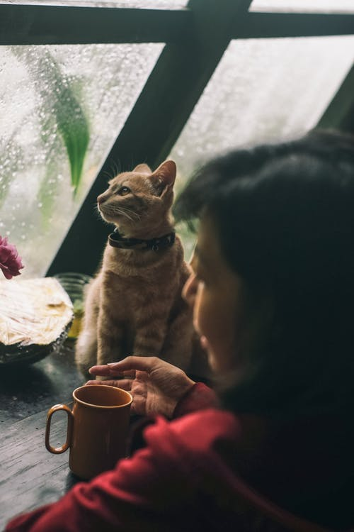 Person Holding Brown Tabby Cat