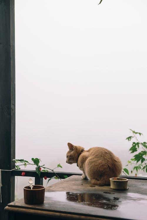 Ilmainen kuvapankkikuva tunnisteilla eläin, eläinkuvaus, heijastus, istua