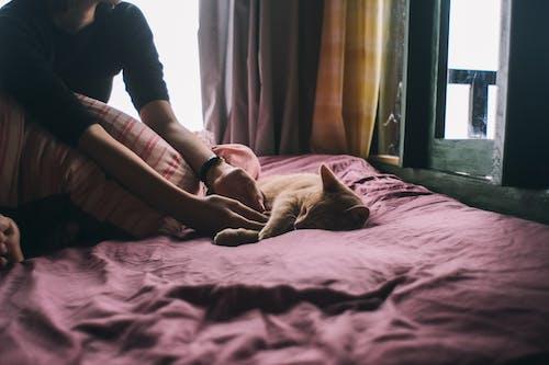 거울, 고양이, 고양잇과, 고양잇과 동물의 무료 스톡 사진