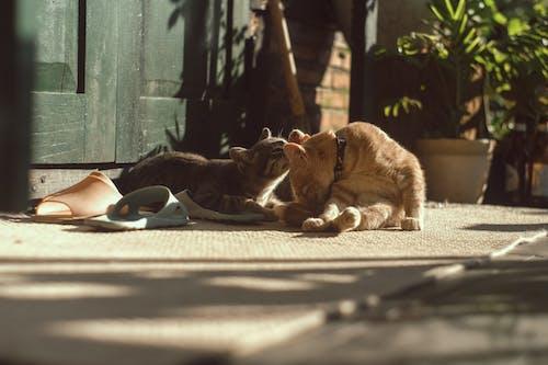 güneşlenmek, iki kedi, kara, kedi içeren Ücretsiz stok fotoğraf