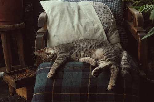 Photo of Tabby Cat Sleeping On Chair
